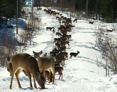 Looks like theres an audition for Rudolph!