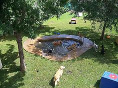 Backyard Dog Playground Design 60 Ideas Best Picture For Cat playground outdoor sand pit For Your Ta Dog Playground, Playground Design, Backyard Playground, Playground Ideas, Dog Friendly Backyard, Dog Backyard, Dog Pond, Luxury Dog Kennels, Dog Kennel Cover