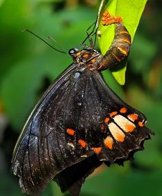 Unusual butterfly shot -