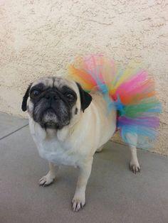 Cumpleaños - arco iris tutu-pink-purple-yellow-turquoise-green-yellow - tutú - tutú de perro