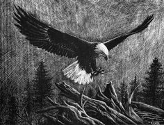 """Lithograph print """"Eagle"""" A pen and ink on scratchboard drawing of an American bald eagle in flight. Each print is signed and numbered with a certificate of authenticity. This Lithograph limited edition print was reproduced from the original scratchboard drawing using the highest quality archival inks and paper. It should be framed under glass and, like any framed work of art, should not be displayed in direct sunlight or near a direct source of heat. Under proper framing your print will..."""