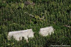Tribo isolada do mundo é descoberta na Amazônia brasileira
