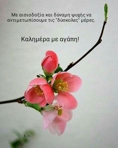 Good Morning Images Flowers, Good Morning Picture, Good Morning Good Night, Good Morning Wishes, Good Morning Texts, Good Morning Quotes, Funny Greek Quotes, Night Pictures, Clever Quotes