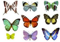 101 Proofs For God: #19 Butterflies and Metamorphosis