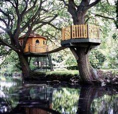 Casas en el árbol...