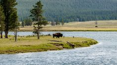 Bison by the River by Roman Koch on 500px