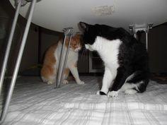 里親さんブログしっとり - http://iyaiya.jp/cat/archives/77364