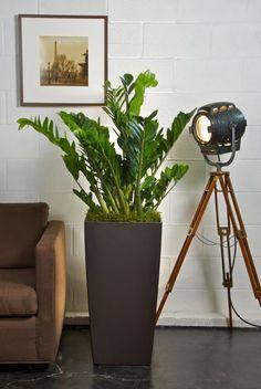 Mettre des plantes dans un couloir ou une pièce sombre.