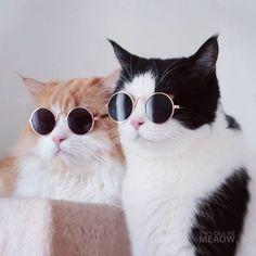 Encontre este Pin e muitos outros na pasta Gatos de Gisele Bündchen.   - Cats and Kittens - #Bündchen #Cats #Encontre #este #gatos #Gisele #Kittens #muitos #outros #pasta #Pin