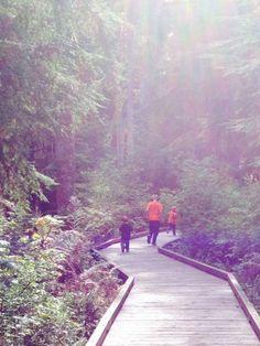 5. Shadow of the Sentinels Trail, North Cascades