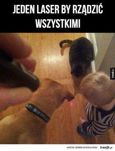 One Laser To Rule Them All funny memes cat dog kid meme lol funny quotes parenting humor funny animals funny parents parenting humor Funny Cute, The Funny, Hilarious, Funny Pics, Funny Animal Pictures, Funny Animals, Chat Facebook, Haha, Funny Memes