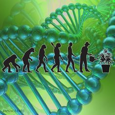 I believe in evolution!
