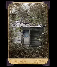 Miss Tiebs resided in this small shack for most of her 98 years.  Her ghost is believed to linger there to this day. She grew herbs, and tended to wild berry bushes; her garden had no borders and grew in the woods in various spots of sun light. She survived mostly on a diet of fern fronds, wild mushrooms, herbs and berries.