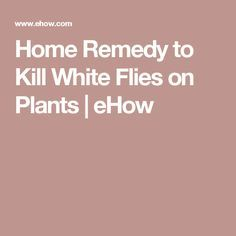 10 Best Home Remedies For Flies Images Pets Home Remedies Cleaning