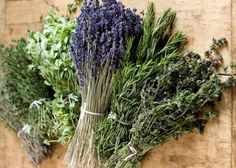 Praktikus jó tanácsok kiskertészeknek és a fűszerek szerelmeseinek.