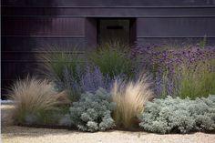 Modern mixed border, grasses, lavender against black wall, gravel path