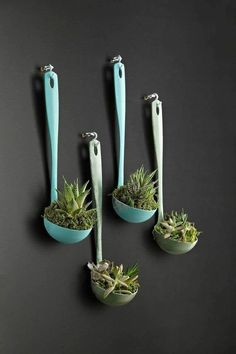 Decoração de cozinha com reciclagem Garden Crafts, Garden Projects, Home Crafts, Diy Home Decor, Wall Decor Crafts, Succulent Gardening, Succulents Diy, Succulent Containers, Hanging Succulents