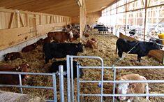 Biohof Schüpfenried Organic, Animals, Animales, Animaux, Animal, Animais