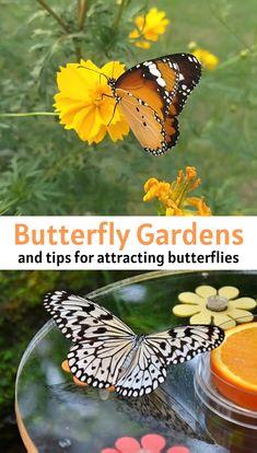 Butterfly Garden Plants, Plants That Attract Butterflies, How To Attract Birds, Butterfly On Flower, Simple Butterfly, Garden Insects, Garden Birds, Garden Animals, Diy Flower