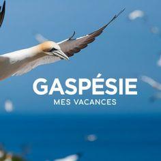 Points à photographier selon le site de Tourisme Gaspésie Points, Movies, Movie Posters, Canada Travel, Posters, Travel, Vacation, Photography, 2016 Movies