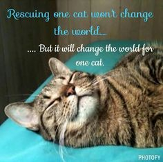 If Everyone In The World Does It, It Just Might Change The World. & ALL Those Kitties Life's. One Life @ A Time & It Could Possibly Happen. Think Happy Thoughts♡
