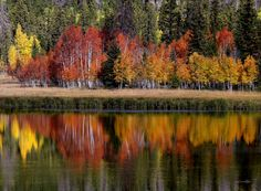 Duck Creek, Cedar Mountain by William Carr -- These colorful trees cast a mid-Fall reflection on the water. The water seems to mirror their intensity as they try and hold on to autumn before winter claims them.