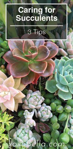 Succulent Gardening, Succulent Care, Planting Succulents, Indoor Plants Succulents, Succulent Display, Purple Succulents, Types Of Succulents, Suculent Plants, Cactus Care