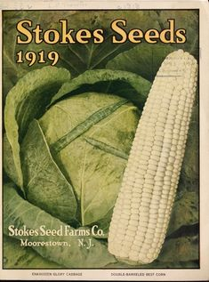 Historical Seed Catalogs: Catalog: Stokes seeds - 10 in a series Garden Windows, Seed Catalogs, Double Barrel, Garden Chairs, Botanical Gardens, Cool Things To Make, Organic Gardening, Container Gardening, The Borrowers