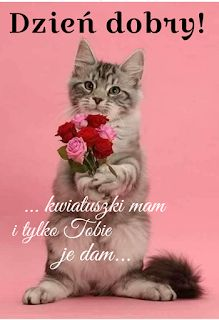 Good Morning, Cats, Poster, Pictures, Animals, Coffee Cafe, Messages, Polish, Photo Illustration