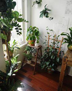 Почему я люблю комнатные растения больше людей