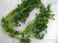 Μυρώνι-Scandix pectin veneris Herbs, Garden, Plants, Food, Diy, Garten, Bricolage, Lawn And Garden, Essen