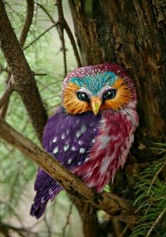 so colourful!