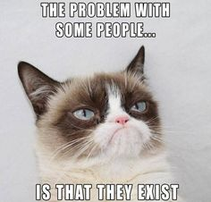 This article lists out 10 Grumpy Cat memes that will make your day. This article also tells you the things that you did not know about Grumpy Cat. Grumpy Cat Quotes, Funny Grumpy Cat Memes, Cat Jokes, Stupid Funny Memes, Funny Relatable Memes, Funny Cats, Funny Stuff, Angry Cat Memes, Funny Drunk