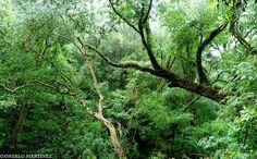 File:Selva montana de las Yungas en Catamarca, Argentina.jpg