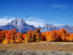 Grand Teton National Park by Angie Purcell