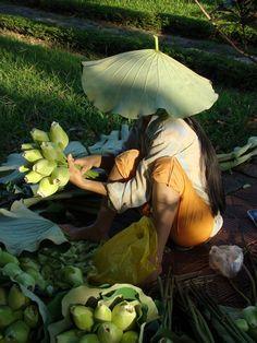 Vendedora de flores de loto - VIETNAM