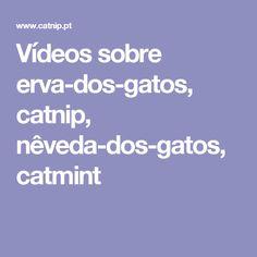 Vídeos sobre erva-dos-gatos, catnip, nêveda-dos-gatos, catmint