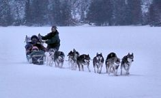 Winter Activity Ideas: Dog Sledding in Banff National Park Canada  [Best Time to Visit Banff National Park]  Tags: Banff Gondola Travel Canada, Sunrise at Banff National Park Banff National Park Camping and Hiking Banff Weather Banff Hotels Banff National Park Banff Things to do in Lake Louise at Banff National Park in Alberta, Canada Banff Hot Springs Banff Springs Hotel Banff Alberta Banff Camping Johnston Canyon Banff National Park