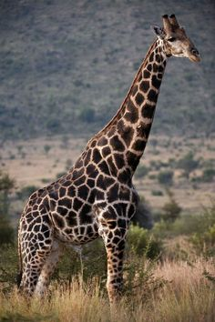 dieren in zuid-afrika   - Explore the World with Travel Nerd Nici, one Country at a Time. http://travelnerdnici.com