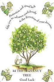 Hazelnut Tree - Google Search