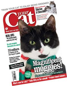 Your Cat Magazine chose one of our collars to feature in their Buyer's Guide to Cat Collars in the February 2013 edition!