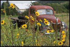 old pickup trucks - Bing Images