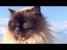 Cat Princess Princess, Cats, Animals, Gatos, Animales, Animaux, Animal, Cat, Animais