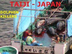 assassinos comem os golfinhos no almoço ainda fresco