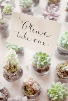 Cute succulents as wedding favors