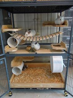The chinchilla cage is the place where your cute pet is exercising, climbing and rolling-over. You chinchilla will be happy to play and relax there. Animal Room, Cage Chinchilla, Chinchilla Care, Diy Chinchilla Toys, Chinchillas, Pet Rats, Cage Hamster, Hamster House, Degu Cage