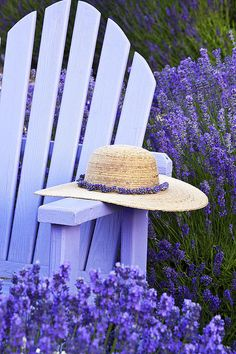 """Purple chair in lavender fields.(""""Lavender Field Resting Place"""" by Eggers Photography) Lavender Cottage, Lavender Blue, Lavender Fields, Lavender Flowers, Purple Flowers, Lavander, Lavender Garden, Purple Art, Lavender Scent"""