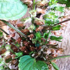 Depois da floração tenho muitas sementes para colher