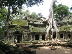 Angkor, Cambodia, Angkor Wat Temple, Nature takes over the temple
