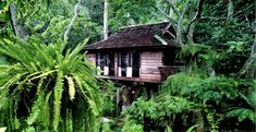 I've becomne something of a fern nut lately as I tackle the shady part of my garden. This place looks amazing: Fern Paradise - To be in touch with the shady of nature in Chiang Mai, Thailand